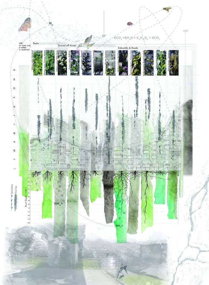 Ecosystematics_aliang